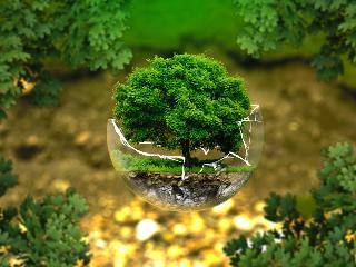 Экологическая экспертиза: ее определение, принципы, задачи